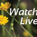 Watch Services Online